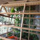 pájaros en casa